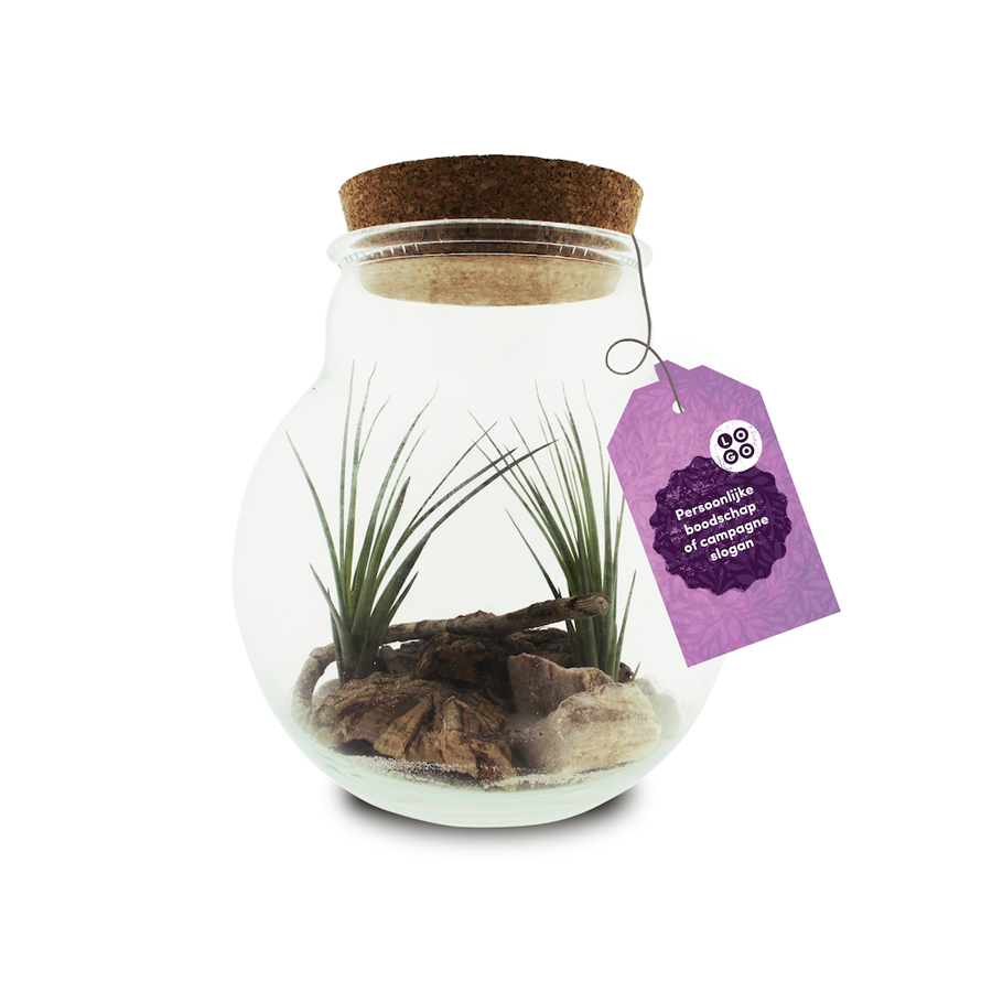 Airplant large