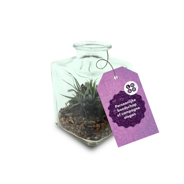 Airplant small