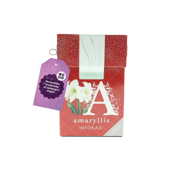 Amaryllis in geschenkdoos