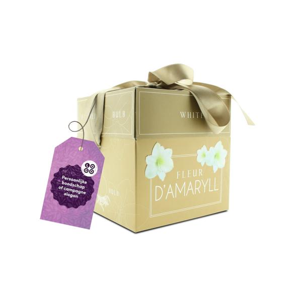 Amaryllis in luxe verpakking