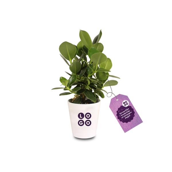 Ogreen plant
